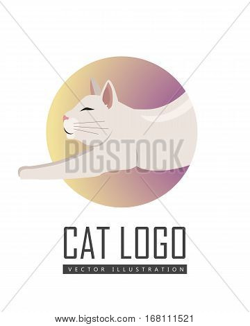 Burmilla cat breed. Cute shorthair cat stretching flat vector illustration isolated on white background. Domestic purebred friend, companion animal. For pet shop ad, hobby concept, breeding club