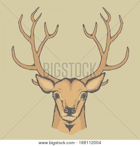Deer vector illustration. Reindeer head with horn