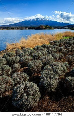 Mountain Fuji view from Oishi park Kawaguchiko lake Japan