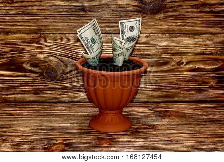 Growing dollars in flowerpot on a wooden background.