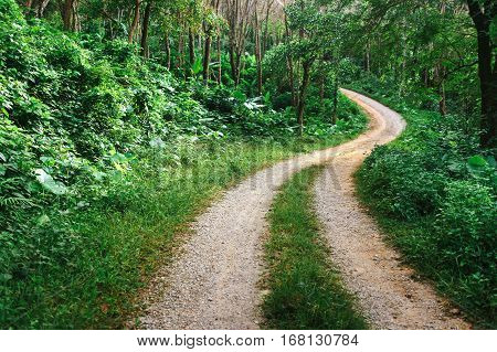Winding road in the jungle. Winding sandy road