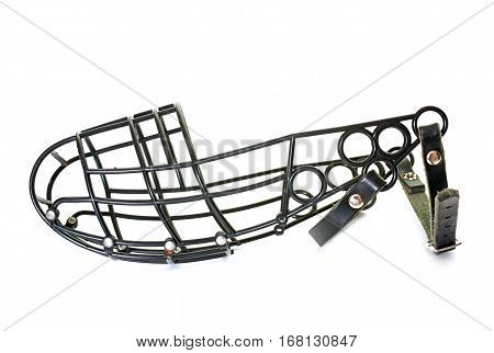 greyhound muzzle in front of white background