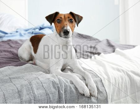 Cute funny dog lying on bed at home