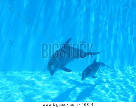 Dolphin And Its Baby