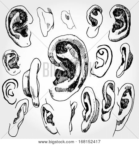 Doodled Ears