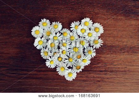 Daisies, hearts, heart, daisy, love, heart, romance, flowers, hearts, flowers, emotions, love, happiness, valentine, devotion, tenderness, trust, sense. Thanks, background brown wood.