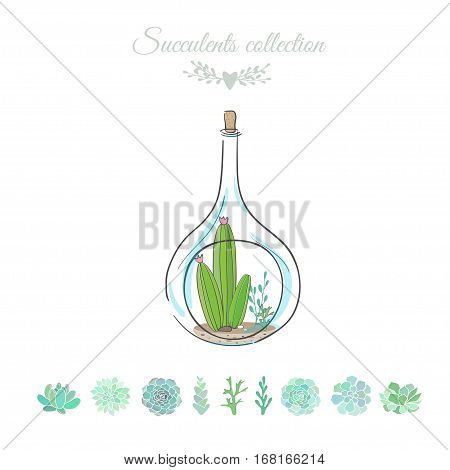 cactus in decorative bottle, vector floral composition with cactus, vector illustration with cactus and succulents isolated on white
