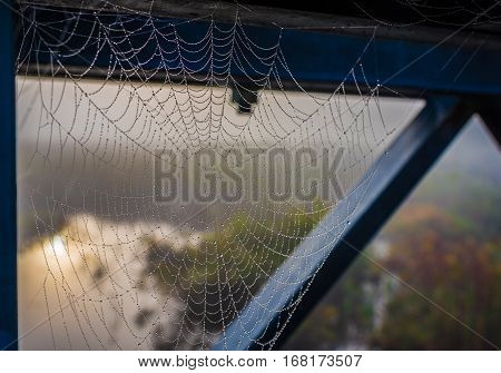 Spider web captures moisture from the air as droplets of water form along its silken strands.  Water droplets formed on a spider web.