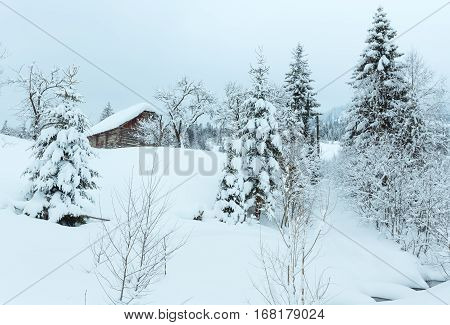 Brook In Winter Ukrainian Carpathian Mountains.