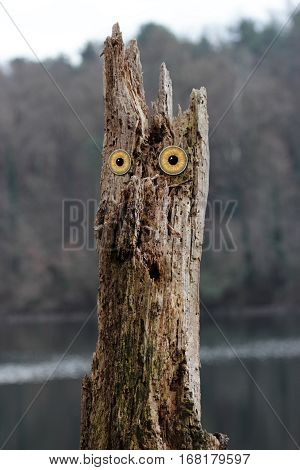 owl eyed tree of a fairly tale