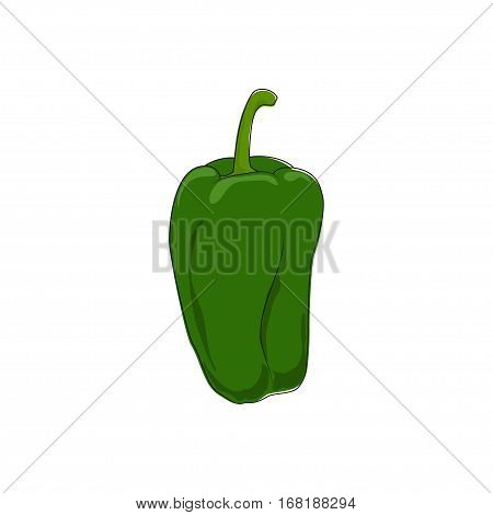 Green Bell Pepper Standing Isolated on White Background, Vegetables Sweet Pepper, Capsicum