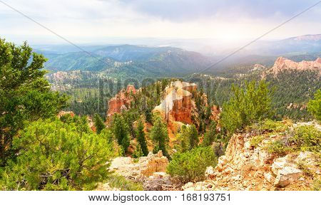 Pine trees on rocky mountains at  Bryce Canyon