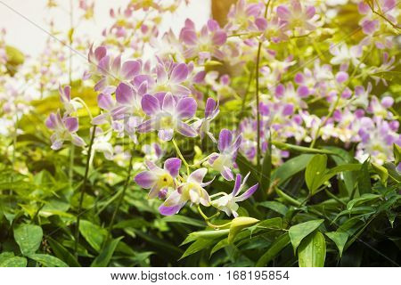 Tropical Orchids Plantation