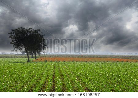 Field on a stormy day in southern India near Vijayawada city