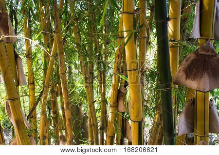 Photograph of a bamboo wall in a forest glade.