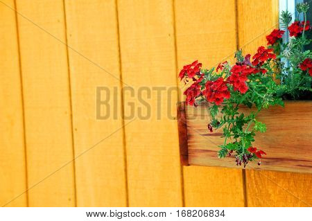 Background image has window box filled with red flowers and a wooden background in yellow.