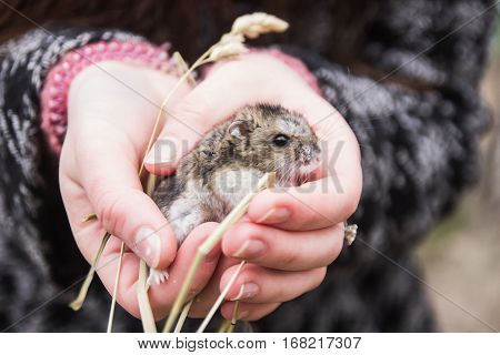 Hamster in the hand at early spirng