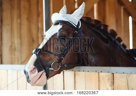 Brown horse in a stable. Horse's head.