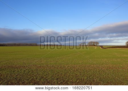 Yorkshire Wolds Wheatlands