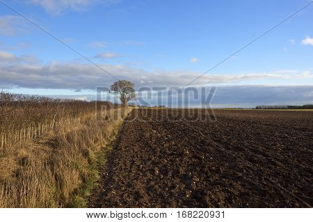 Plow Soil And Hedgerow