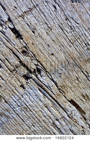 old wood detail  background 01