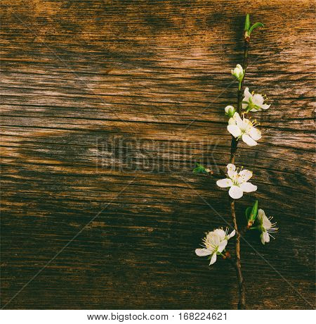 blooming branch on old wooden grunge background with space for text. tinted photo