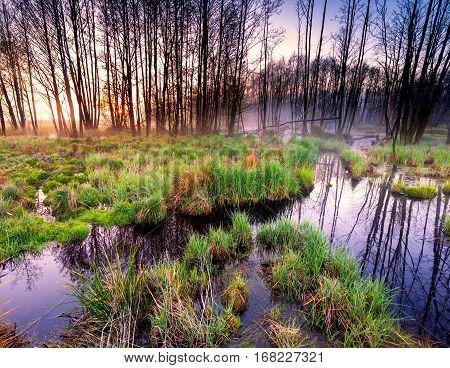 Sunrise Over Beautiful Spring Wetlands