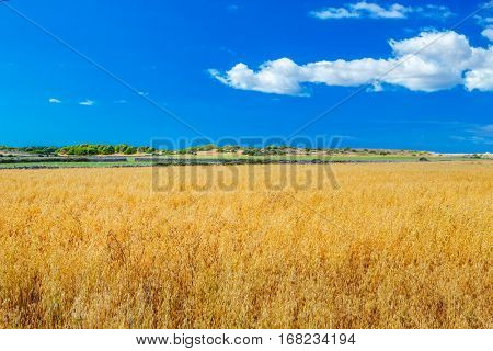 Menorca farmland landscape on sunny day, Balearic islands, Spain.