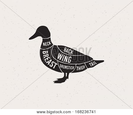 Meat cuts. Diagrams for butcher shop. Scheme of duck. Animal silhouette duck. Vector illustration.