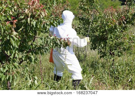 Disease and insect management in fruit orchard