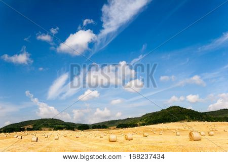 Summer Field with cultivation of grain and bale of straw