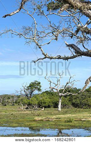 Yala National Park. Wild moorland. Sri Lanka.