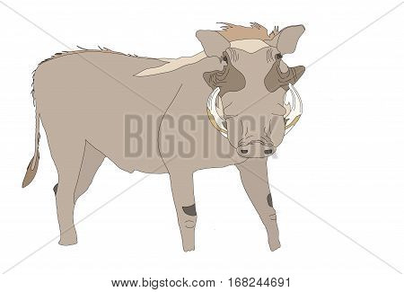Warthog Seen From Front