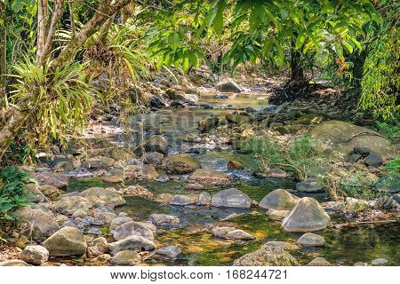 Small mountain stream in the shade of the tropical forest with snag tree in the foreground Khao Sok National Park, Surat Thani Province, Thailand. Natural background.