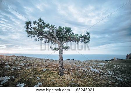 A Tree At Ai-petri Plateau In Crimea