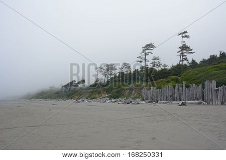 Forest on the Pacific coast on Kalaloch Campground, Washington USA