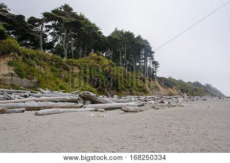 Kalaloch Beach, Pacific coast in Washington, USA