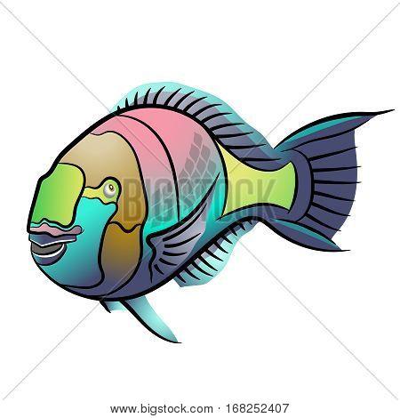 Scarus ferrugineus, Rusty parrotfish, Scarus fish in red sea.