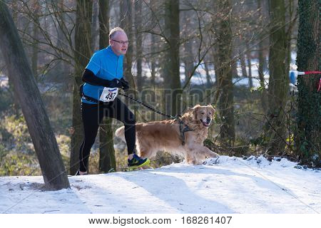 OLDENZAAL NETHERLANDS - JANUARY 22 2017: Dog and unknown owner running up a snowy hill during a canicross contest