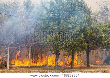 Wild bush fire with large orange flames