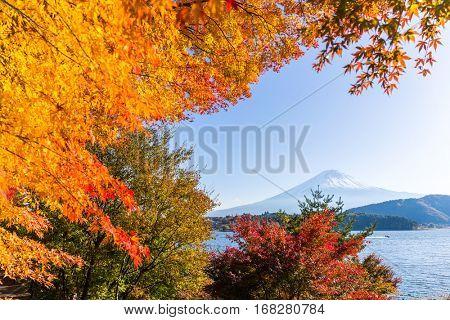 Fujisan and maple tree in Lake Kawaguchi