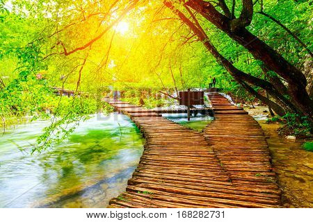 Summer Forest Pathway In Plitvice National Park