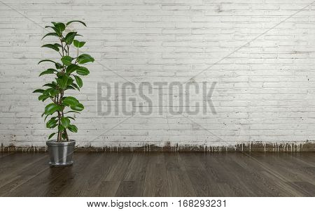 Indoor plant with green leaves in shiny flowerpot standing on laminate wooden floor against white painted brick wall with copy space. 3d Rendering.