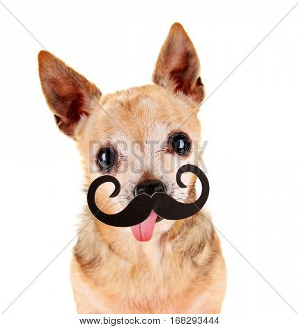 a cute chihuahua with a photo booth mustache prop mustache in front of him with his tongue out on an isolated white background