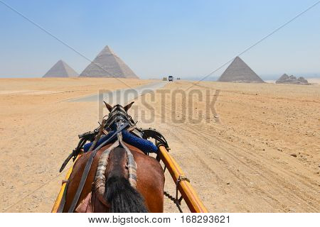 Horse of a tour chariot in Giza Pyramids - Cairo, Egypt