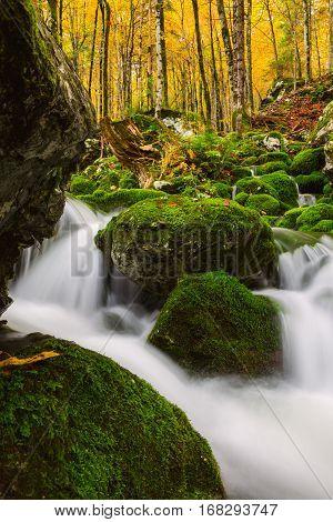 View Of A Beautiful Autumn Creek Near Bohinj