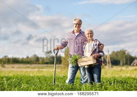 farming, gardening, agriculture, harvesting and people concept - senior couple with shovel and box of carrots at farm garden