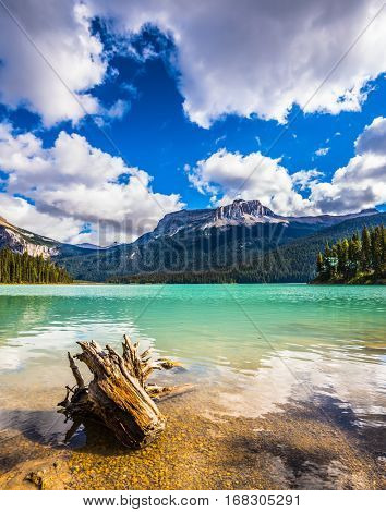 The concept of eco-tourism. Yoho National Park in Canada. Mountain Emerald lake in the wooded mountains. Sunny day in autumn