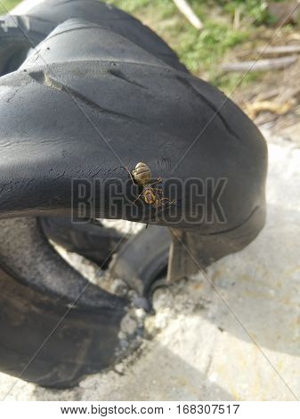 an ant walking on black tires in search of food