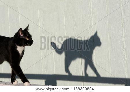 A strolling cat is preceded by her shadow